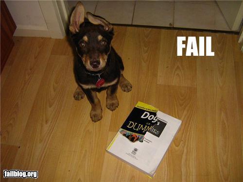 Dogs Training Fail Randomoverload