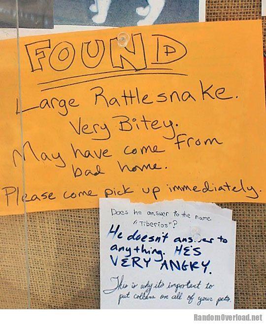 Image result for bitey rattlesnake