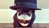 Image funny-dog-top-hat-mustache-classy.jpg