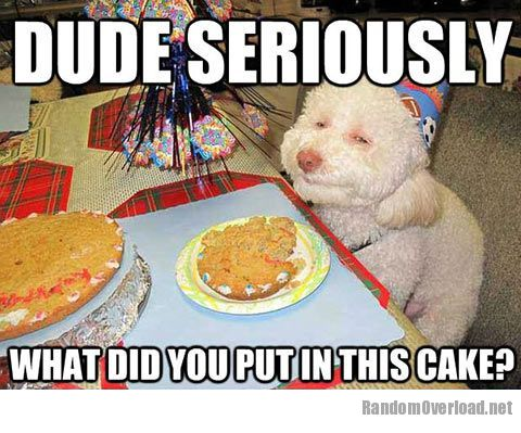 http://randomoverload.org/wp-content/uploads/2013/02/ad12funny-dog-birthday-cake-celebration.jpg