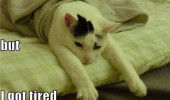 Image funny-cat-bed-tired.jpg