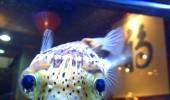 Image cute-fish-happy-face.jpg