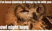 Image funny-owl-face-pun.jpg