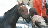 Image cute-story-horse-Nicole-Graham-water.jpg