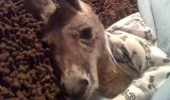 Image cute-kangaroo-pajamas-baby.jpg