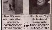 Image funny-ad-classified-boyfriend-cat.jpg