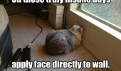 Image funny-cat-wall-face.jpg