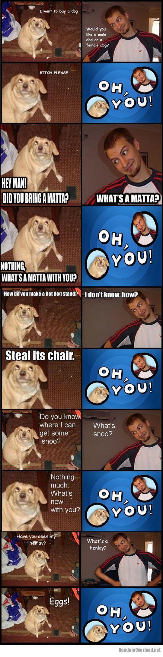 Dog memes oh you