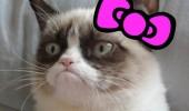 Image funny-cat-Grumpy-Cat-Kitty.jpg