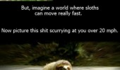 Image funny-sloths-slow-fast-scary.jpg