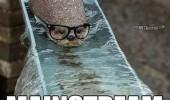 Image funny-otter-river-hipster-mainstream.jpg