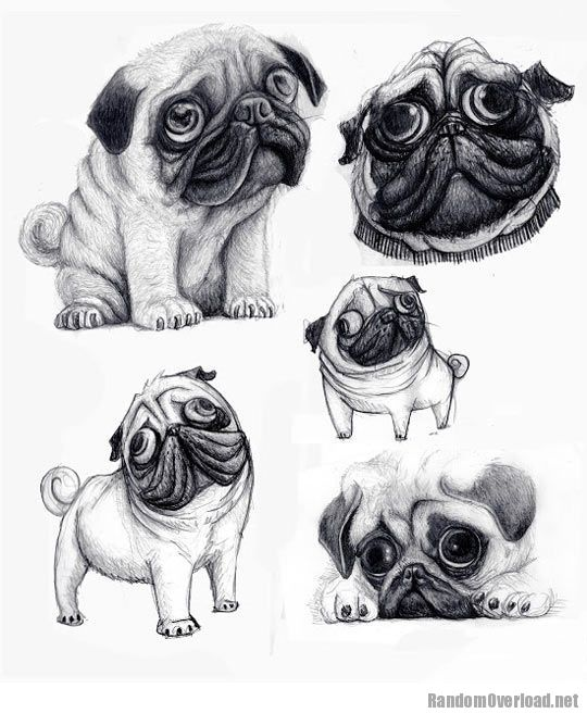 Pug Face Line Drawing : Cute pug drawings pictures to pin on pinterest daddy