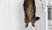 Image funny-cat-floating-kitchen.jpg