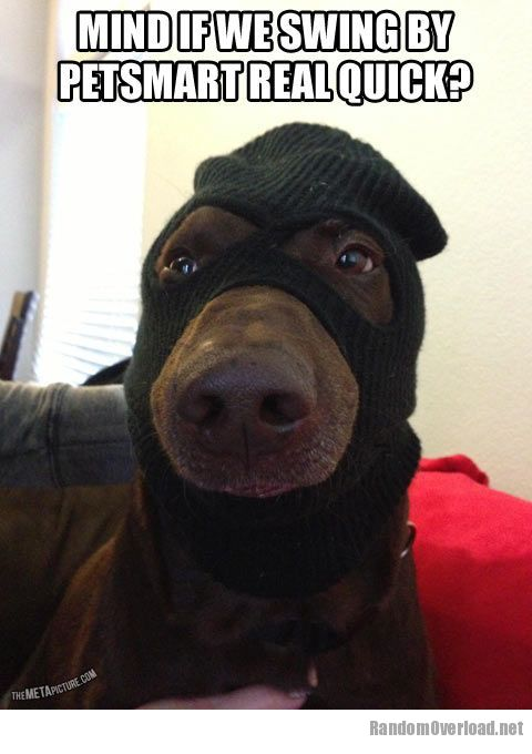 Face Like A Robber S Dog