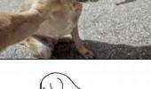 Image funny-dog-self-shot-camera.jpg