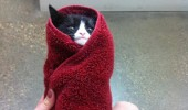 Image funny-cat-towel-misbehaving-vet.jpg