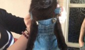 Image funny-cat-clothes-mad.jpg