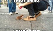 Image funny-dog-little-puppy-shoes-cute.jpg