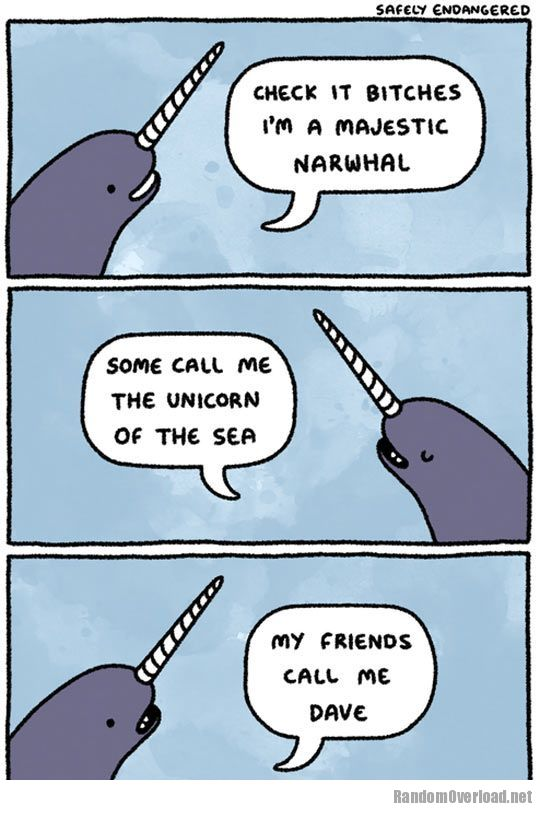 Facebook Twitter PinterestNarwhals Cartoon