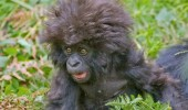 Image funny-little-monkey-hair.jpg