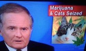 Image funny-news-cat-weed-seized.jpg