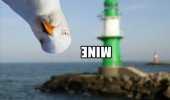 Image funny-mine-seagull-lighthouse.jpg