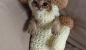 Image funny-mushroom-cat-costume-photo.jpg