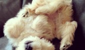 Image cute-fluffy-pets-hairy-compilation.jpg
