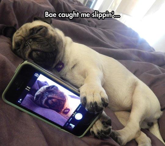 It Happens To Pugs Too - RandomOverload