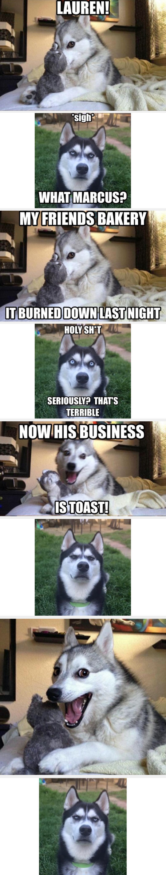 Funny Husky Jokes Meme : Pun husky is at it again randomoverload