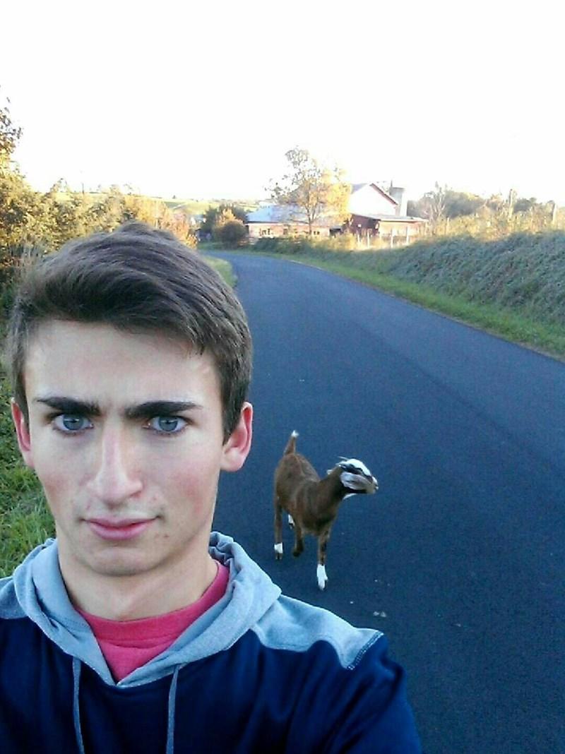 eyebrows,list,goats,photoshop,selfie,funny