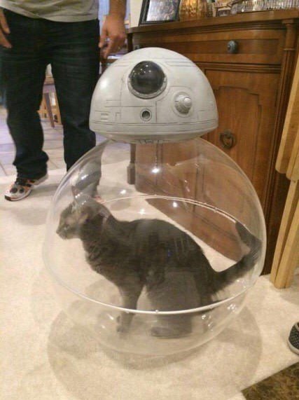 funny animal image cat in a star wars BB-8 ball