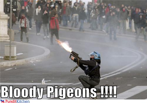 political pictures - Bloody Pigeons !!!!