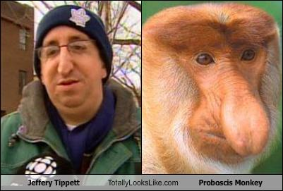 jeffery tippett totally looks like proboscis monkey   randomoverload