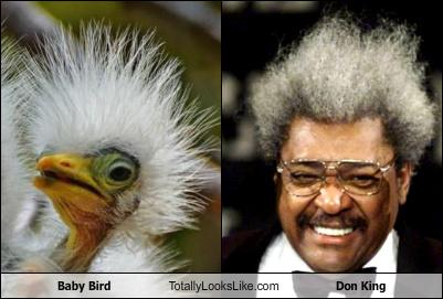 baby bird totally looks like don king randomoverload. Black Bedroom Furniture Sets. Home Design Ideas