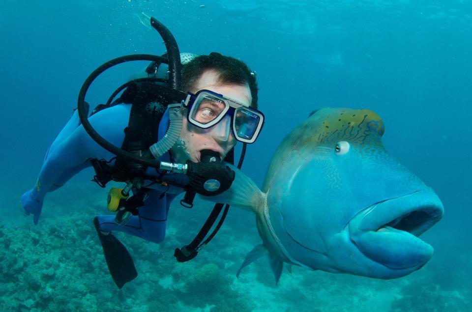 Открытки 8-м, смешные подводные картинки