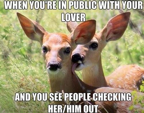 The deer lick