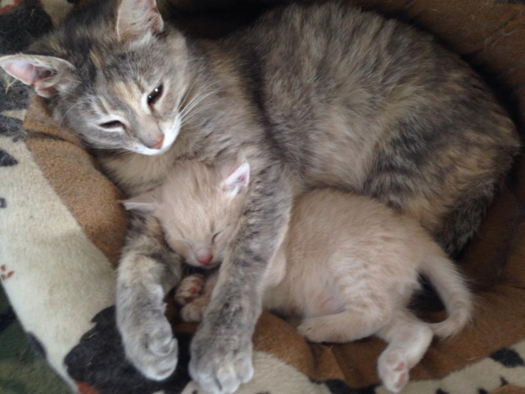My Mom S Cat Only Had One Kitten They Pretty Much Chill