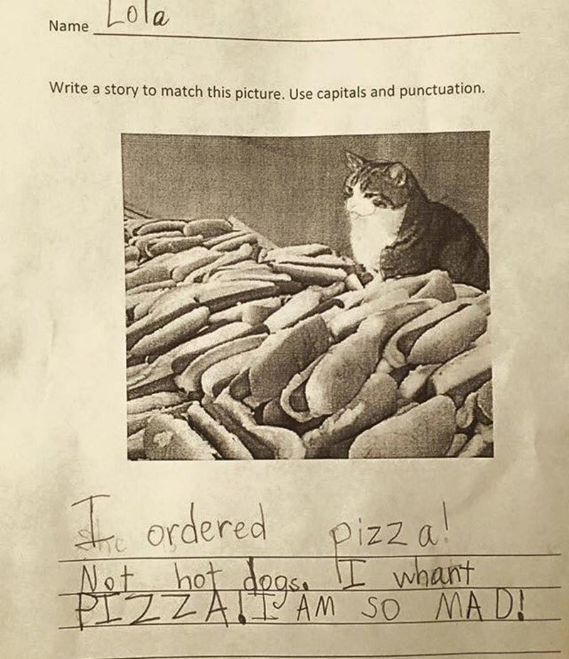 funny school image cat pizza hotdog story