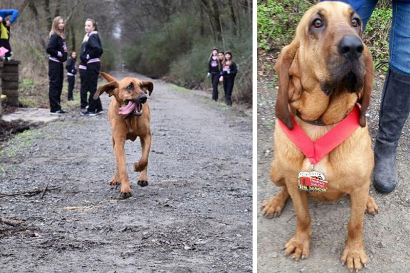 cute dogs This Last Minute Competitor in a Half-Marathon Took Seventh Place and All of Our Hearts