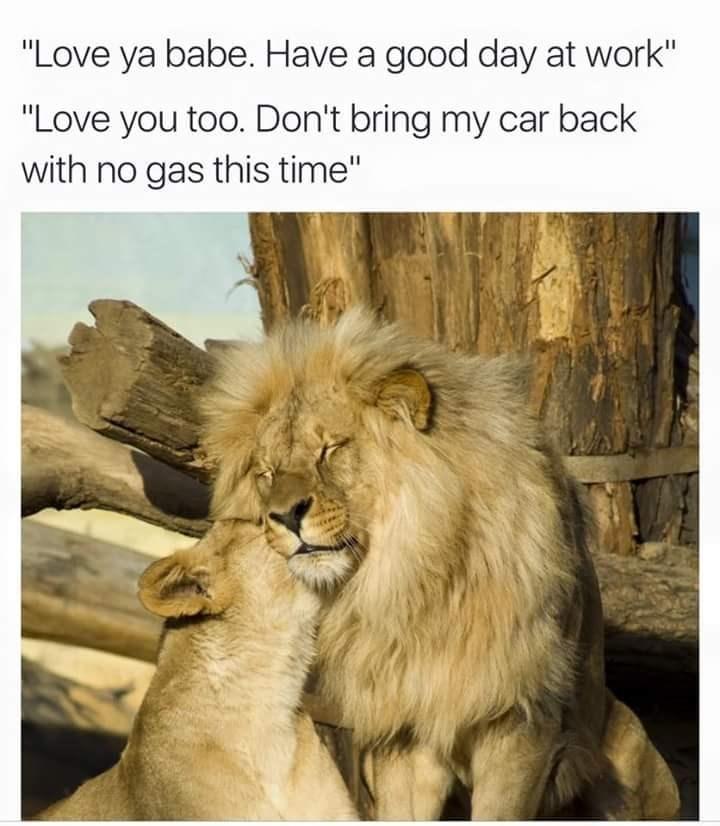 twitter,list,lion king