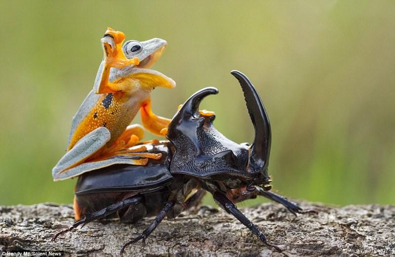 photoshop,beetle,Reddit,frog