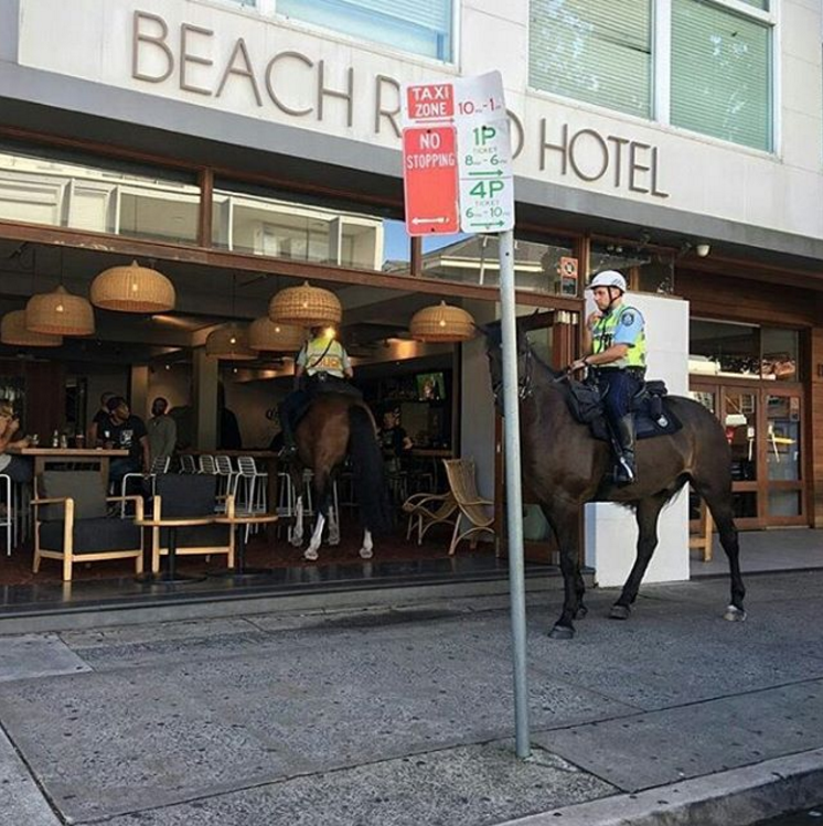 funny animal image a policeman and horse walk into a bar IRL
