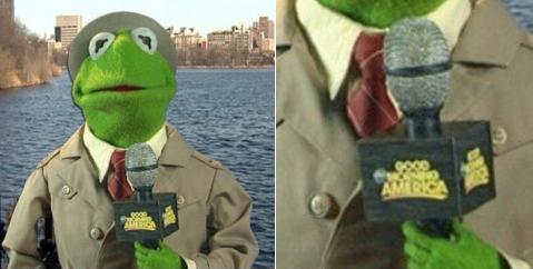 kermit the frog,twitter,list,Good Morning America,Memes,tea,lizard