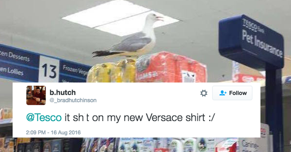 anarchy,tesco,twitter,FAIL,list,seagulls,seagull