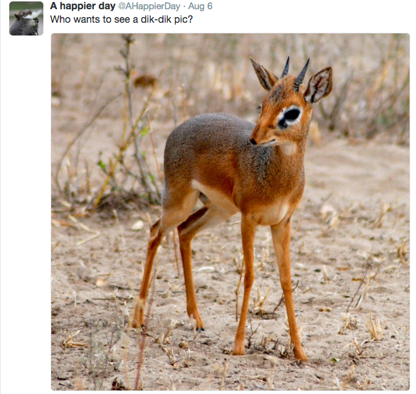 dik dik,twitter,jokes,antelope,no chill,tweets